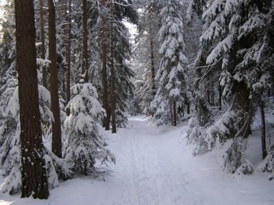 http://www.vanovice.cz/upload/soubory_hlavni_stranka/zima/uvod_8.jpg